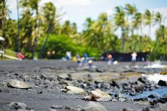 Hawaiian green turtles relaxing at Punaluu Black Sand Beach on the Big Island of Hawaii. USA Stock Image