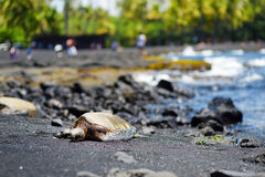 Hawaiian green turtles relaxing at Punaluu Black Sand Beach on the Big Island of Hawaii Stock Photo