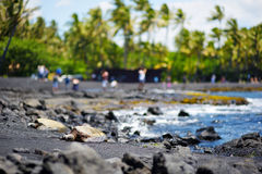 Hawaiian green turtles relaxing at Punaluu Black Sand Beach on the Big Island of Hawaii Royalty Free Stock Photography