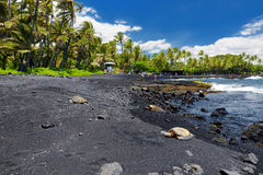 Hawaiian green turtles relaxing at Punaluu Black Sand Beach on the Big Island of Hawaii Stock Images