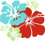 Hawaiian Hibiscus Stock Photos