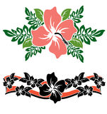 Hawaiian Hibiscus flowers Stock Images