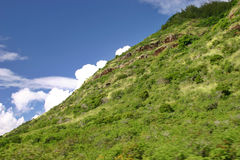 Hawaiian Hillside. Taken of a hillside along the Pali Highway located on the Island of Oahu, Hawaii Stock Images