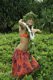 Hawaiian hula Stock Images