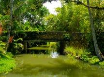 Hawaiian jungle Royalty Free Stock Images