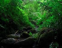Hawaiian Jungle. This image was taken in Oahu, Hawaii deep in the Rainforest. It rains here at least twice a day every day stock images