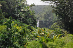 Hawaiian Jungle Stock Photo