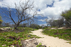 Hawaiian Landscape Stock Photo