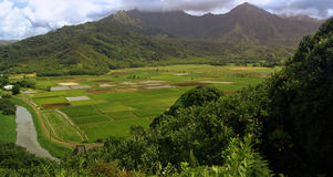 Hawaiian Landscape. With ricefields Stock Image
