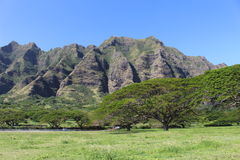 Hawaiian landscape in sunny day. Hawaiian landscape with monkey pod trees and mountains Royalty Free Stock Photo