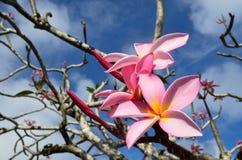 Hawaiian Lei flower Stock Photo