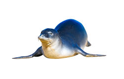 Monk seal. Hawaiian monk seal, isolated. White background royalty free stock photo