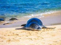 Seal on beach Royalty Free Stock Photo