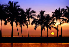 Hawaiian palm tree sunset royalty free stock image