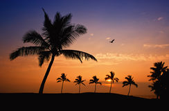 Hawaiian palm tree sunset Royalty Free Stock Images