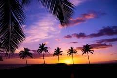 Hawaiian palm tree sunset Stock Images