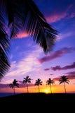 Hawaiian palm tree sunset Royalty Free Stock Photo
