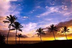 Hawaiian palm tree sunset Royalty Free Stock Photography