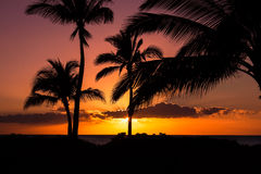 Hawaiian palm trees silhouettee against a pink and orange sky at Royalty Free Stock Photography