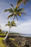 Hawaiian Palms and Beach Royalty Free Stock Photography