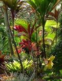 Hawaiian paradise. Enjoy traveling to a Hawaiian tropical jungle of paradise. Birds, butterflies, gardens of paradise Royalty Free Stock Photos