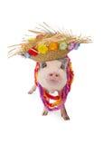 Hawaiian Pig Wearing Hat and Lei Stock Photo