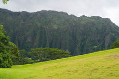 Hawaiian Rain Forest in the Koolaus. The Hawaiian rain forest of Hoomaluhia botanical gardens in Kaneohe Hawaii on the tropical island paradise of Oahu, Hawaii Stock Photography