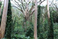 Hawaiian rainforest Royalty Free Stock Images