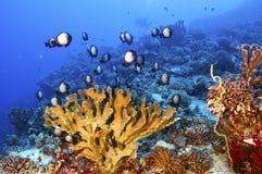 Hawaiian Reef Stock Photo