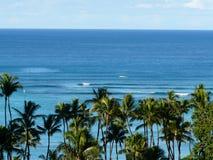 Hawaiian scene trees and ocean Royalty Free Stock Image