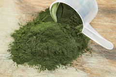 Spirulina powder scoop Royalty Free Stock Photo