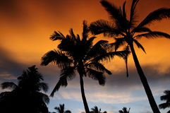 Hawaiian sunset. The silhouette of palm trees at sunset on the North Shore of Oahu in Hawaii with the sun's glow off thunder clouds Royalty Free Stock Photo
