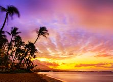 Hawaiian sunset. With beach and palm trees Royalty Free Stock Images