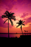 Hawaiian Sunset on Big Island Stock Image