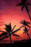 Hawaiian Sunset on Big Island Royalty Free Stock Photos