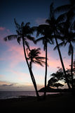 Hawaiian Sunset on Molokai. Palm trees on the beach are mere silhouettes against the sky about ten minutes after sunset on Molokai island, Hawaii Stock Photography