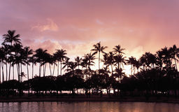 Hawaiian sunset palms Stock Photos