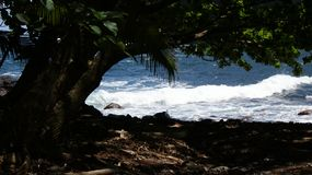 Hawaiian Surf and Tree Royalty Free Stock Photos