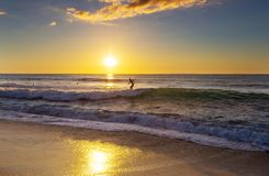 Surfing. Hawaiian surfing beach at sunset Royalty Free Stock Photos