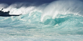Hawaiian Wave Royalty Free Stock Images