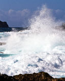 Hawaiian Wave Stock Photography