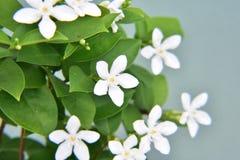 Hawaiian wedding flower bokeh Stock Photo