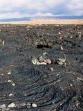 Hawaiibo Lava Field Arkivbild