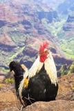 Hawaiin Chicken Stock Photography