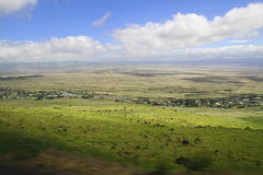 Hawaiin Countryside. Amazing view of the countryside on the big island of hawaii and seeing the clear sky and beautiful green lush land with the horses in the Stock Image