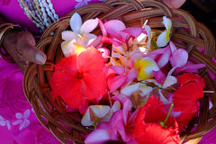 Hawaiin flowers , Stock Images