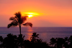 Hawaiin Sunset. Silhouettes of palm trees as the sun sets over the ocean Royalty Free Stock Photo