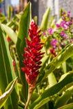 Hawaiina Στοκ Φωτογραφίες