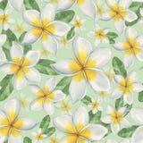 Hawaiische Blumen Lizenzfreies Stockfoto