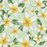 Hawaiische Blumen Stockfotos